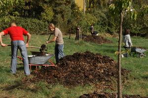 Leaf-mulch